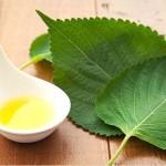 えごま油の効能や食べ方について ※たけしの家庭の医学